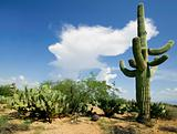 Saguaro and Cloud