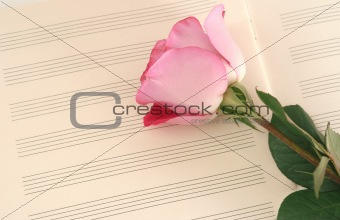One beautiful pink rose lays on a music book