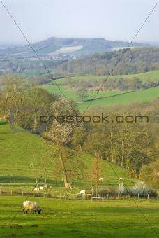 cotswolds landscape