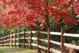 Fence in the Fall