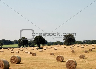 French Hay