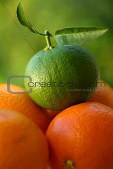 A green orange
