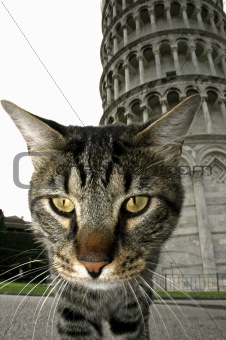Cat and pisa tower