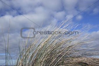 doon grass 3