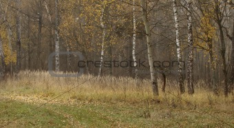 forest scene 3