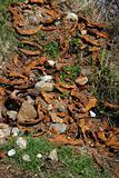horse shoe waste