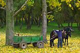 horse with foal in autumn forest