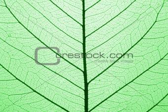 leaf texture