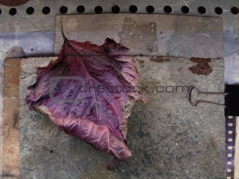 Fallen leaf