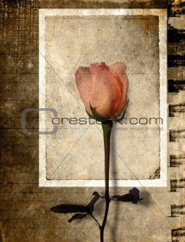 Framed rose on grunge background
