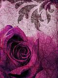 Grunge background with purple rose