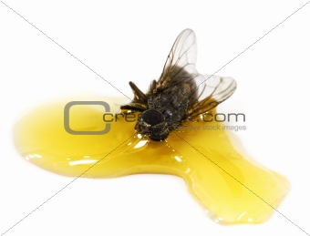 a fly stick in the honey