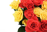 Roses closeup with copy space