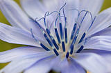 Blue flower close-up