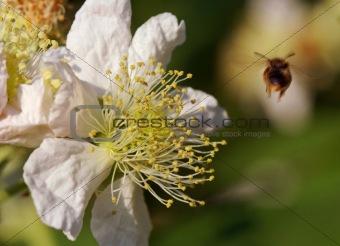 Bee leaving flower