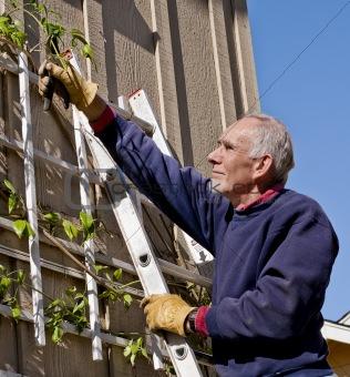 Active senior pruning vine