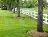 line of trees  and fence
