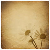 Vintage chamomile flowers background. Isolated on white.