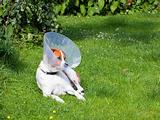 canine patient 3