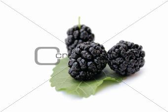 blackberry, blackberries
