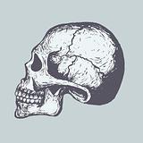 Graphic_0009_Skull