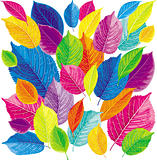 Brightly colored leaves
