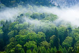 Gorgeous green forest in the fog