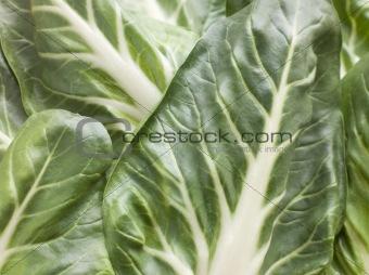Pak Choi, Bok Choy, Chinese Cabbage