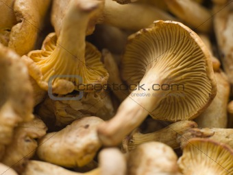 Fresh Girolle Mushrooms
