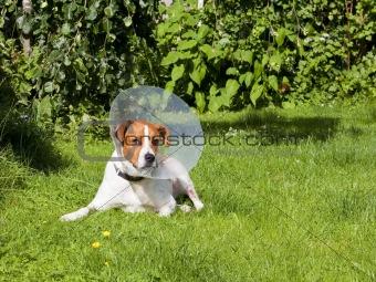 canine patient 2