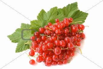 redcurrant