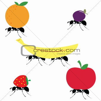 ants carrying different fruits