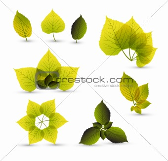 Fresh abstract leaf elements