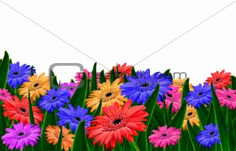Daisy field with white background