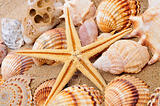 seashells and seastar