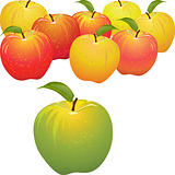vector green apple vs set of red and yellow apples