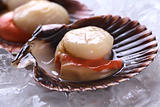 Raw Queen Scallops on Ice