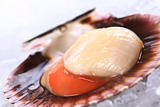 Raw Queen Scallop on Ice
