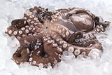 Complete Raw Octopus on Ice