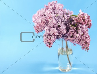 Bouquet of violet lilac