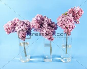 Bouquet of violet lilac