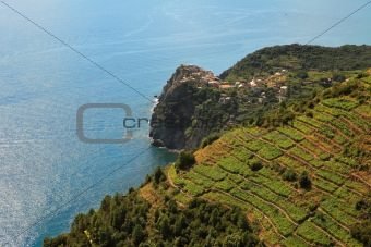 Aerial view on vineyards and Mediterranean Sea.
