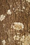 Fir-tree bar texture