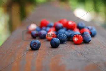 Colourful forest berries
