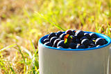 Berries in the cup outdoors