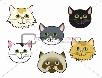 Kitty Faces