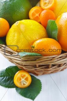 Citrus close-up.