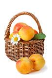 Apricot.