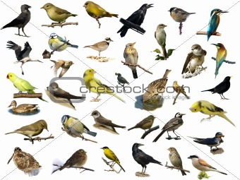 Set of 35 (different) photographs of birds isolated on white