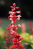 nice red flower